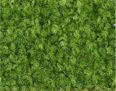 Verde 128